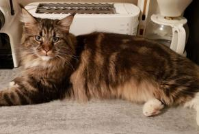 Disappearance alert Cat  Female , 3 years Saint-Armel France