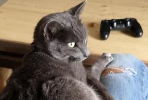 Disappearance alert Cat  Male , 6 years Preyssac-d'Excideuil France