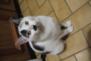 Discovery alert Cat  Female Escrennes France