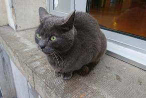 Discovery alert Cat miscegenation Female Valenciennes France