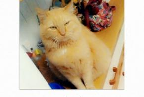 Disappearance alert Cat  Male , 7 years Saint-Germain France
