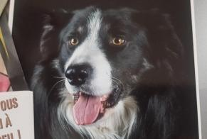 Disappearance alert Dog  Male , 3 years Villenave-d'Ornon France