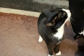 Discovery alert Cat Unknown Lunel France