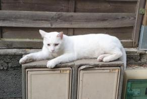 Disappearance alert Cat  Male , 4 years Saussan France