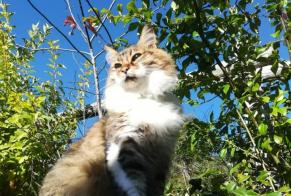 Disappearance alert Cat Female , 5 years Thônes France