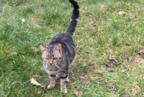 Discovery alert Cat  Male Le Sappey France