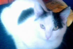 Disappearance alert Cat  Male , 3 years Nanterre France