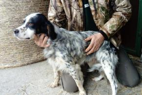 Discovery alert Dog  Male Catteville France