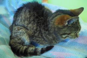 Discovery alert Cat  Female , 10 years Palaiseau France