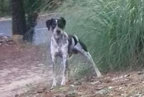Discovery alert Dog Unknown , 2 years Le Coteau France