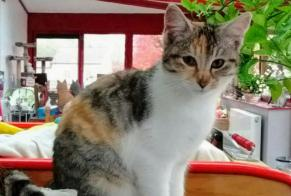 Discovery alert Cat miscegenation Female , Between 4 and 6 months Chevincourt France