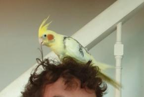 Disappearance alert Bird Male , 2019 years Anglet France