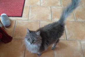 Discovery alert Cat miscegenation Female Marignane France