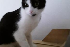 Disappearance alert Cat Male , 1 years Corps-Nuds France