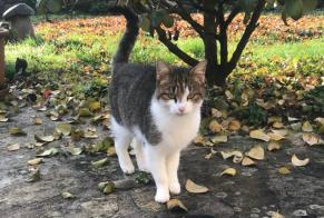 Discovery alert Cat Female Gahard France