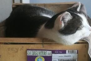 Disappearance alert Cat  Male , 3 years Rennes France