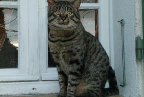 Discovery alert Cat Male Grasse France