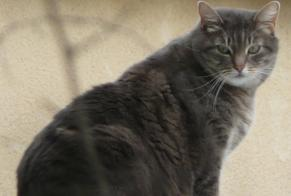 Discovery alert Cat miscegenation Female , 8 years Assas France