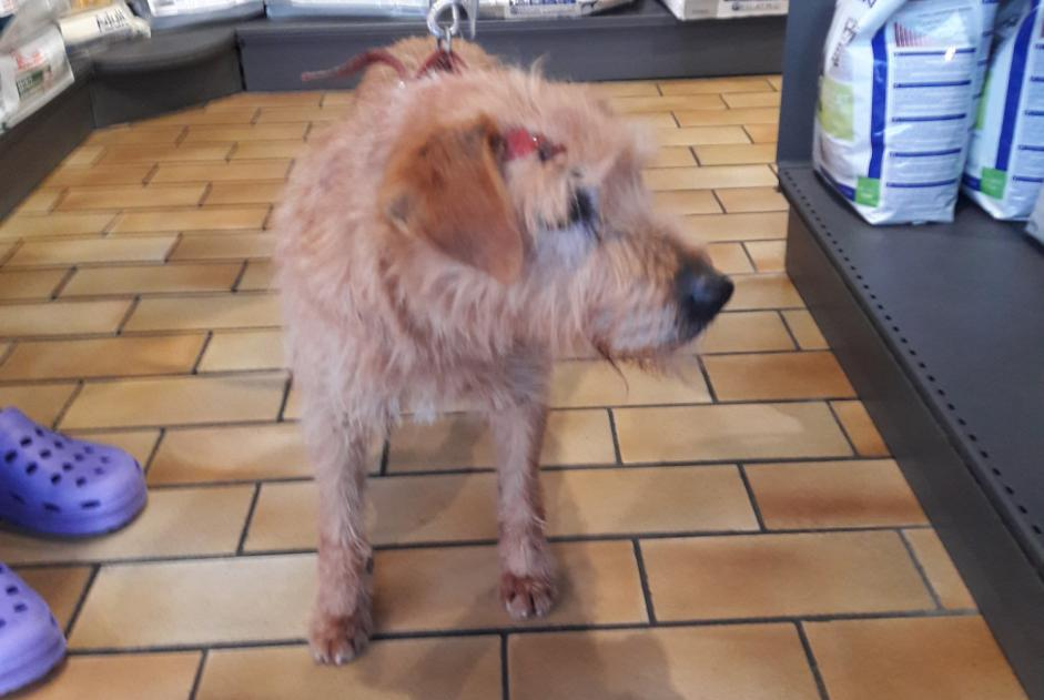 Discovery alert Dog Male Artannes-sur-Indre France