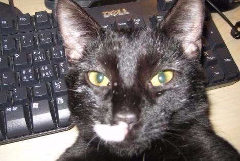 Disappearance alert Cat miscegenation Male , 9 years Valladolid Spain