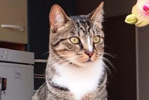 Disappearance alert Cat  Male , 3 years Tinqueux France