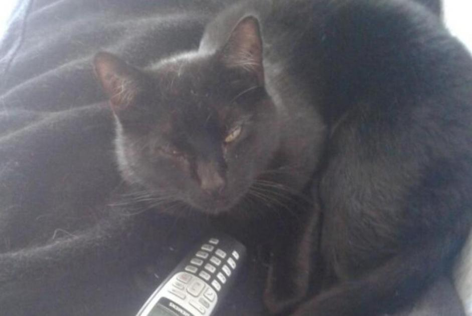 Disappearance alert Cat  Male , 15 years Bellerive-sur-Allier France