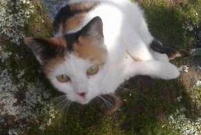 Disappearance alert Cat  Female , 3 years Dompierre-les-Ormes France