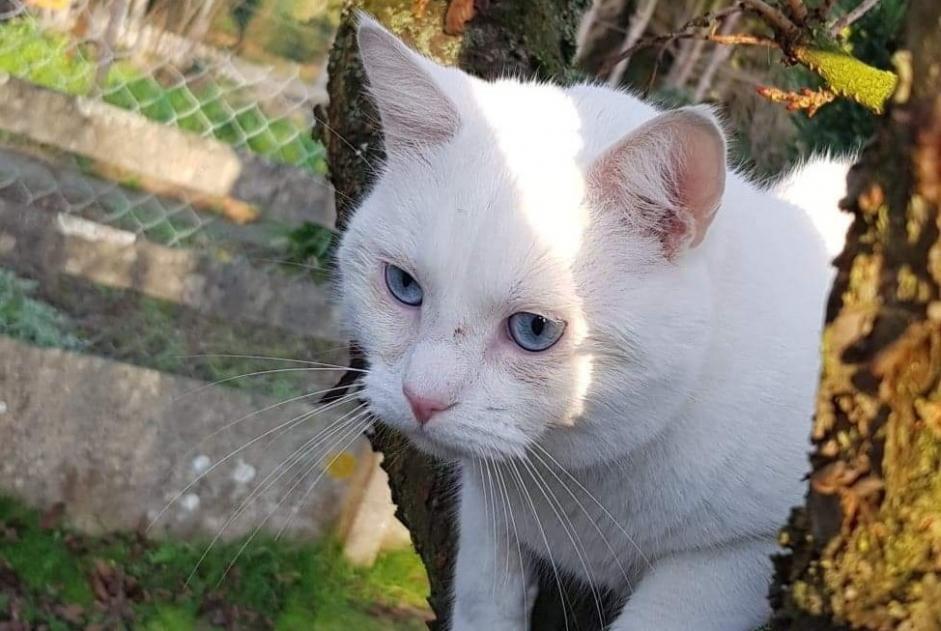 Disappearance alert Cat Male , 2 years Sin-le-Noble France
