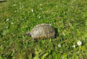 Disappearance alert Tortoise Male , 2021 years Bergerac France