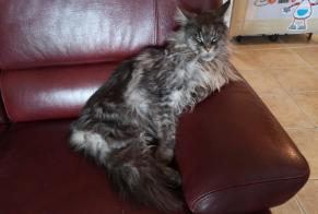 Disappearance alert Cat  Male , 8 years Samoreau France