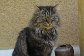 Disappearance alert Cat miscegenation Female , 4 years Sens France