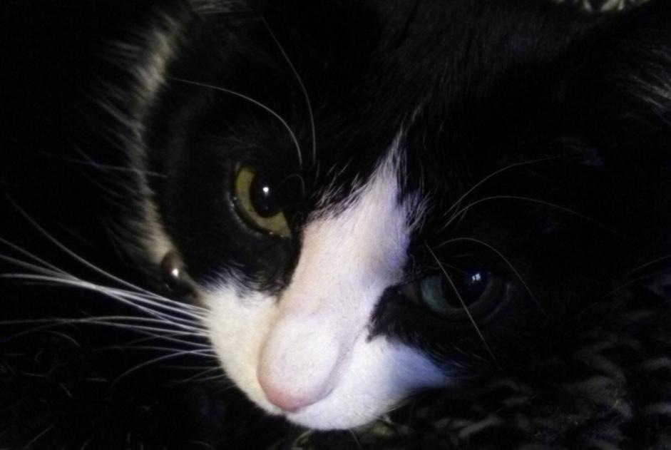 Disappearance alert Cat Male , 12 years Annecy France