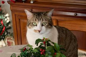 Disappearance alert Cat Female , 2 years Limoges France