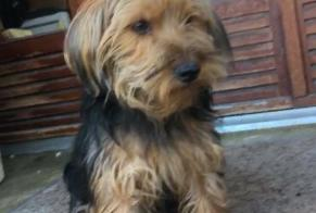Disappearance alert Dog  Male , 1 years Paris France
