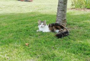 Disappearance alert Cat Female , 3 years Voulton France