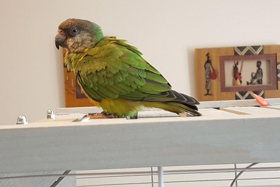 Disappearance alert Bird Male , 2 years Nangis France