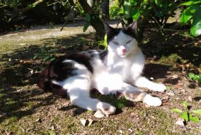 Disappearance alert Cat  Male , 2 years Melgven France
