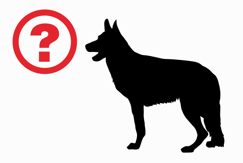 Discovery alert Dog Male Roquettes France