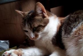 Disappearance alert Cat miscegenation Female , 4 years Tulle France