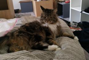 Disappearance alert Cat  Female , 9 years Osny France