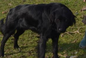 Disappearance alert Dog Male , 6 years Damiatte France
