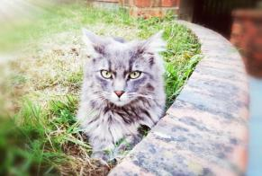 Disappearance alert Cat miscegenation Female , 2 years Val d'Erdre-Auxence France