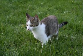 Disappearance alert Cat miscegenation Female , 6 years Chapelle-Vallon France