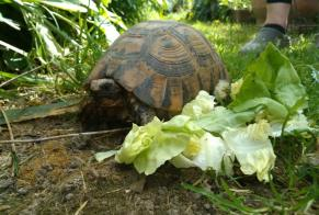 Discovery alert Tortoise Unknown Carbonne France
