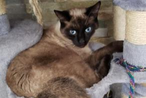 Disappearance alert Cat miscegenation Male , 1 years Chéroy France