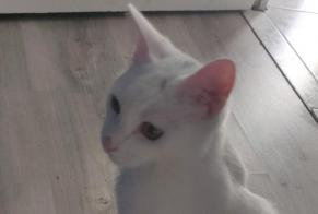 Disappearance alert Cat Male , 1 years Ennery France
