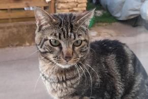 Discovery alert Cat Male Colombier-Fontaine France