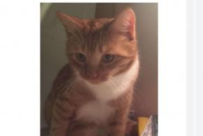 Disappearance alert Cat  Male , 1 years Pithiviers-le-Vieil France