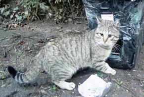Discovery alert Cat Male , 5 years Houilles France