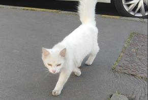 Discovery alert Cat miscegenation Male Tours France
